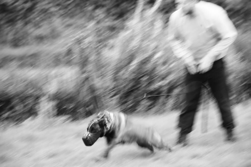 munster canine